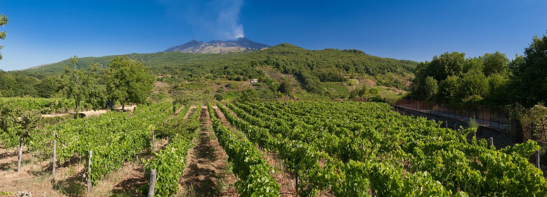 Trekking etna wine